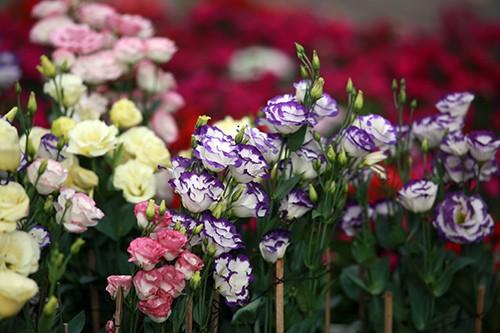 Chiều 29 Tết, người dân TP Hồ Chí Minh đổ xô đi mua hoa ảnh 8
