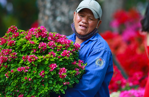 Chiều 29 Tết, người dân TP Hồ Chí Minh đổ xô đi mua hoa ảnh 10