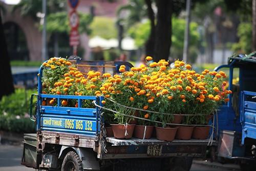 Chiều 29 Tết, người dân TP Hồ Chí Minh đổ xô đi mua hoa ảnh 2