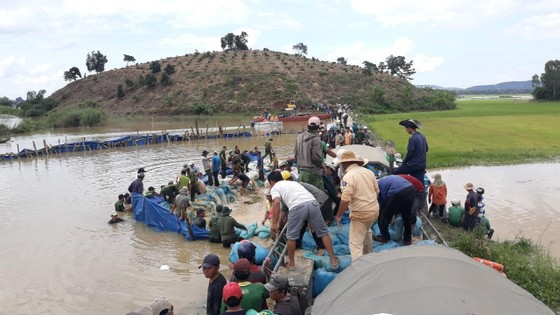 Vỡ đê, hàng trăm người dân trầm mình cứu lúa ảnh 7