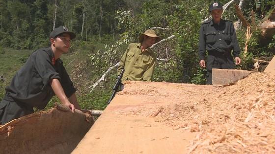 Phát hiện vụ khai thác trái phép gần 200m³ gỗ ảnh 2