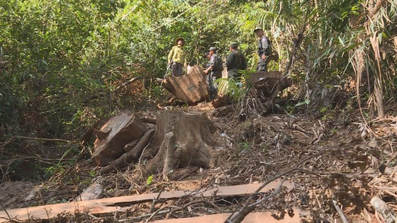 Phát hiện vụ khai thác trái phép gần 200m³ gỗ ảnh 4