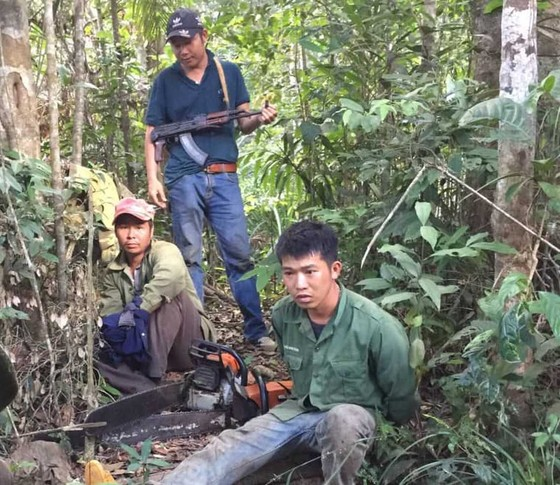 Phát hiện vụ khai thác trái phép gần 200m³ gỗ ảnh 1