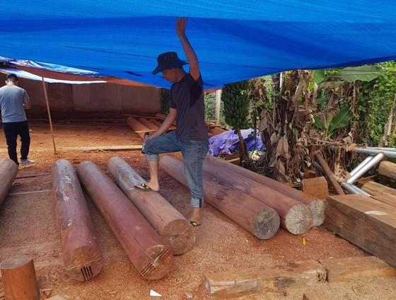 Phát hiện thêm nhiều điểm tập kết gỗ 'khủng' tại Đắk Lắk ảnh 2