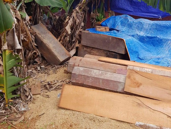 Phát hiện thêm nhiều điểm tập kết gỗ 'khủng' tại Đắk Lắk ảnh 7