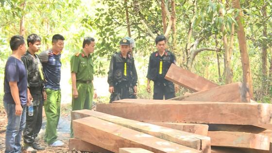 Vụ phá rừng quy mô lớn ở Đắk Lắk: Phát hiện thêm 500m³ gỗ ảnh 1