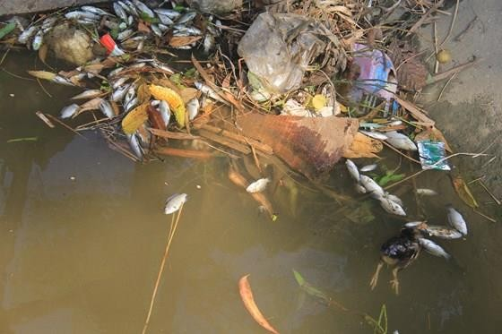 Vụ cá chết trắng kênh thủy lợi: Một người dân nhận đổ hóa chất xuống kênh ảnh 1
