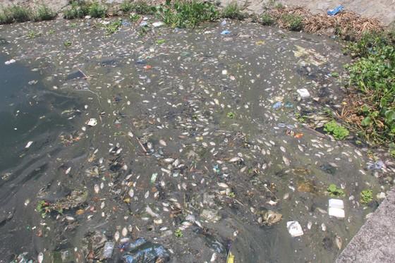 Cá chết nổi trắng hồ điều hòa ở Quảng Nam ảnh 1
