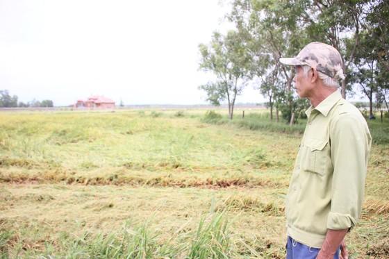 Nông dân Quảng Trị hối hả thu hoạch lúa sau khi lũ rút ảnh 1