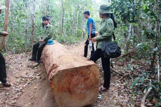 40 đối tượng đe dọa lực lượng chức năng, cướp tang vật nghi liên quan phá rừng ảnh 1