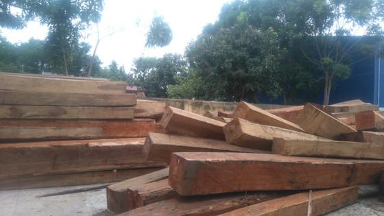 Bắt giám đốc công ty tàng trữ hàng chục khối gỗ lậu  ảnh 1