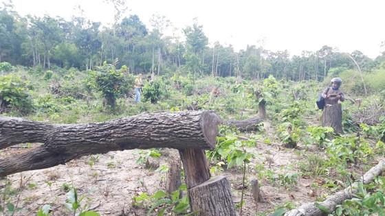 Bức xúc rừng bị phá, dân viết đơn phản ánh lên tỉnh   ảnh 1