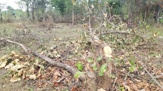 Bức xúc rừng bị phá, dân viết đơn phản ánh lên tỉnh   ảnh 4