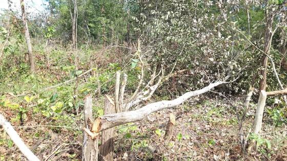 Bức xúc rừng bị phá, dân viết đơn phản ánh lên tỉnh   ảnh 5