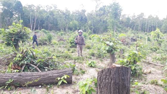 Bức xúc rừng bị phá, dân viết đơn phản ánh lên tỉnh   ảnh 2