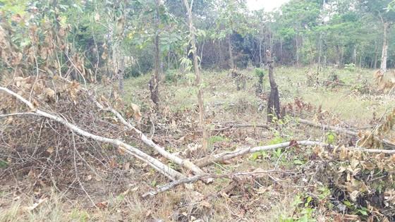 Bức xúc rừng bị phá, dân viết đơn phản ánh lên tỉnh   ảnh 6
