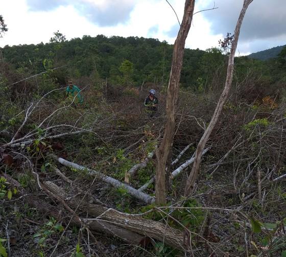 Thuê người phá rừng để… trồng rừng   ảnh 2