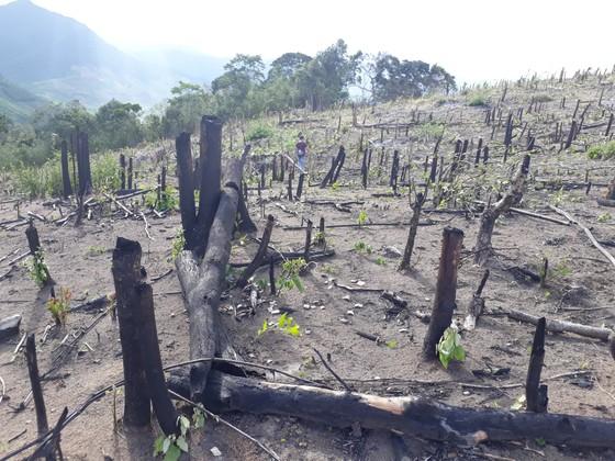 Bắt 5 đối tượng chặt phá 3.000m² rừng phòng hộ ở khu vực biên giới ảnh 1