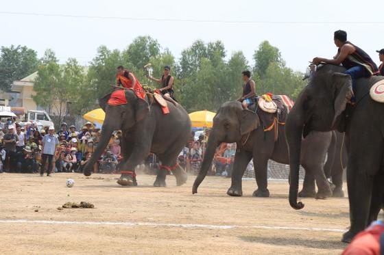Đến xứ voi xem voi đá bóng ảnh 13