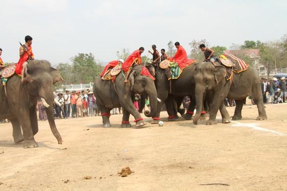 Đến xứ voi xem voi đá bóng ảnh 6
