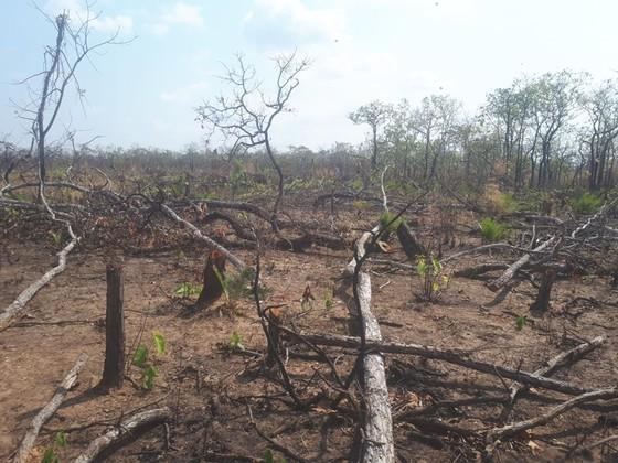 Khởi tố vụ phá rừng ở huyện biên giới Chư Prông ảnh 1