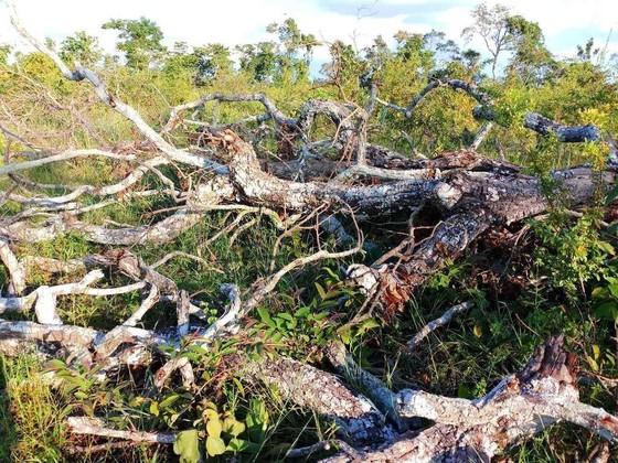 Yêu cầu kiểm điểm tổ chức, cá nhân liên quan vụ xà xẻo tiền dịch vụ môi trường rừng  ảnh 1