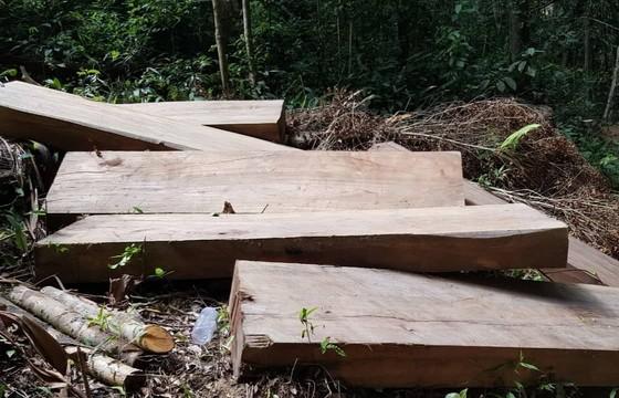 Khởi tố, bắt tạm giam đối tượng cưa hạ gỗ trái phép ảnh 1