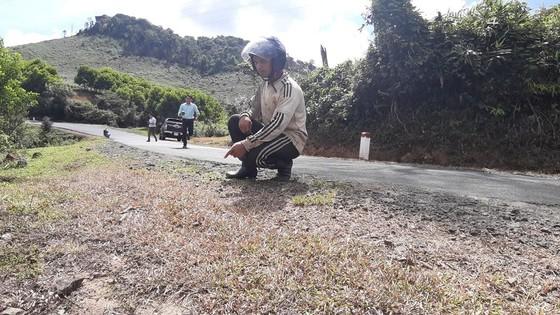 Phát quang cây cỏ 2 bên quốc lộ bằng… thuốc diệt cỏ ảnh 1