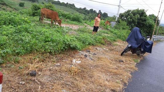 Hai cá nhân bị kỷ luật liên quan đến việc phun thuốc diệt cỏ trên quốc lộ ảnh 1