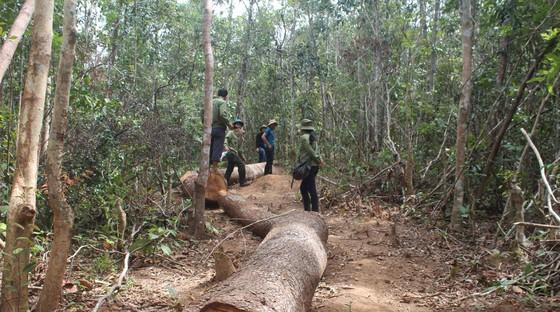 Một xã để mất 850ha rừng, chi sai gần 1 tỷ đồng ảnh 1