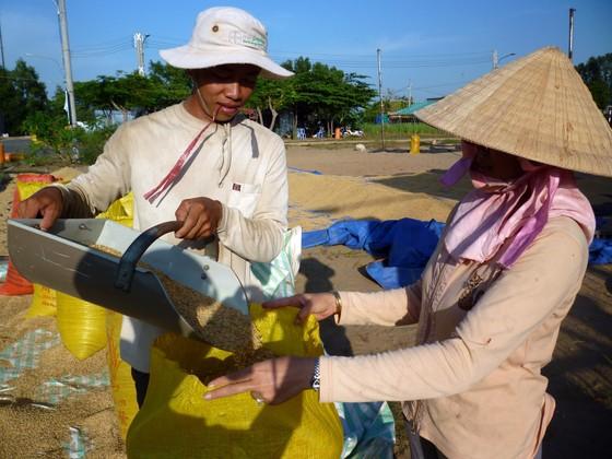 Đã có gạo xuất khẩu đạt ngưỡng 700 USD/tấn ảnh 1