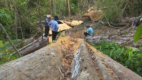 Cận cảnh vụ rừng bị đốn hạ, cưa xẻ ngổn ngang tại Đắk Lắk ảnh 3
