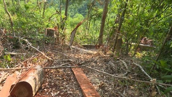 Cận cảnh vụ rừng bị đốn hạ, cưa xẻ ngổn ngang tại Đắk Lắk ảnh 4