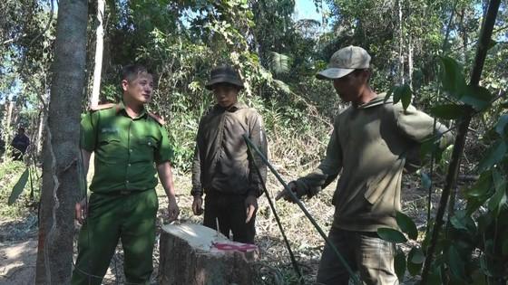 Cận cảnh vụ rừng bị đốn hạ, cưa xẻ ngổn ngang tại Đắk Lắk ảnh 1