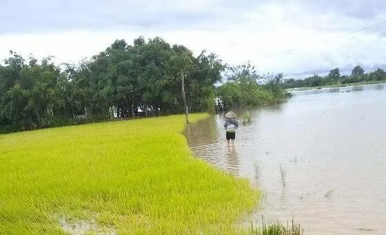 Mưa lớn, nhiều địa phương ở Đắk Lắk bị cô lập, phải di dời dân ảnh 5