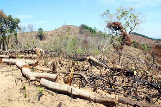 Bắt nghi phạm chủ mưu vụ phá 61ha rừng tự nhiên ở Bình Định ảnh 1