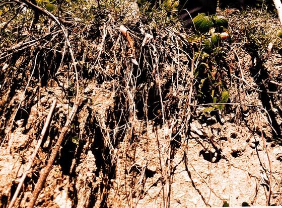 Mời cơ quan địa chất khảo sát việc núi Goi Ra Hách xuất hiện hàng chục vết nứt ảnh 1