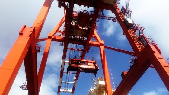 Cận cảnh tấn hàng thứ 8 triệu thông cảng Quy Nhơn. ảnh 3