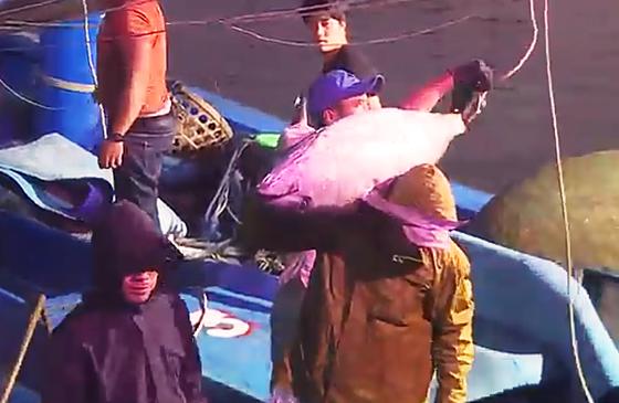 Ăn tết trên biển, một tàu cá Bình Định trúng mẻ cá bò gù 350 triệu ở đảo Hoàng Sa ảnh 3