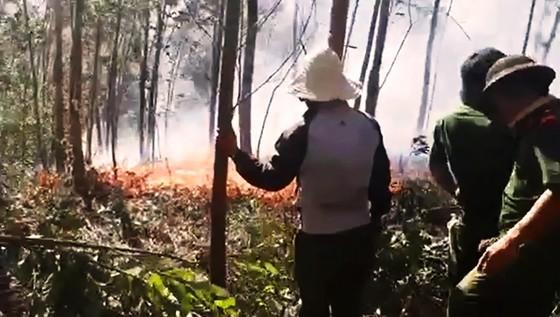 5 giờ đồng hồ, lửa lớn thiêu cháy gần 20ha rừng trồng ảnh 3