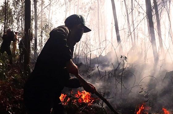 5 giờ đồng hồ, lửa lớn thiêu cháy gần 20ha rừng trồng ảnh 1