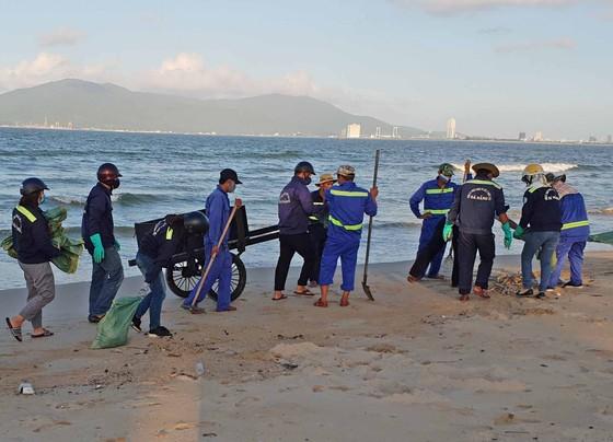 Cá chết hàng loạt dạt vào bờ biển Đà Nẵng ảnh 2