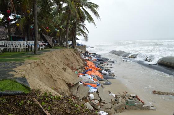 Bờ biển Đà Nẵng, Quảng Nam sạt lở nghiêm trọng do mưa to, gió lớn ảnh 7