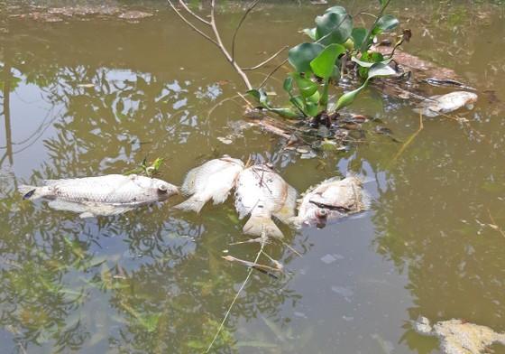 Phát hiện khoảng 1 tấn cá chết trên sông Bàn Thạch ảnh 1