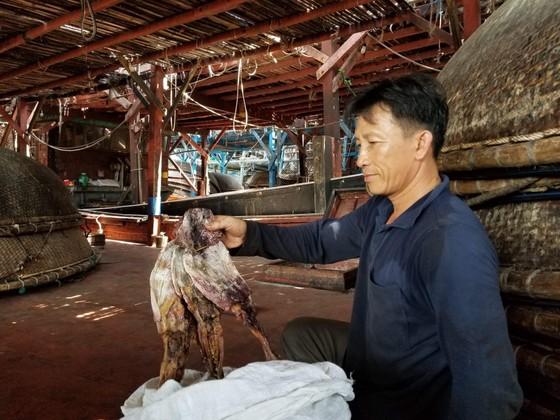 """Gần 1.000 tấn mực bị """"ế"""" do thương lái Trung Quốc thay đổi cách thu mua"""