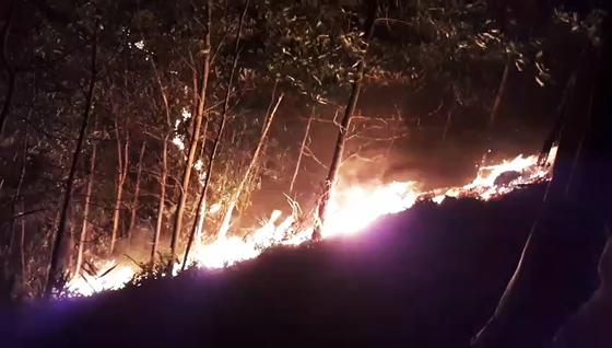 Kịp thời không chế 3 đám cháy rừng tại Hiệp Đức ảnh 1