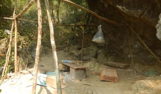 Lập đoàn liên ngành điều tra vụ phá rừng di sản Phong Nha - Kẻ Bàng ảnh 1