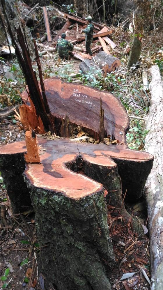 Lập đoàn liên ngành điều tra vụ phá rừng di sản Phong Nha - Kẻ Bàng ảnh 2