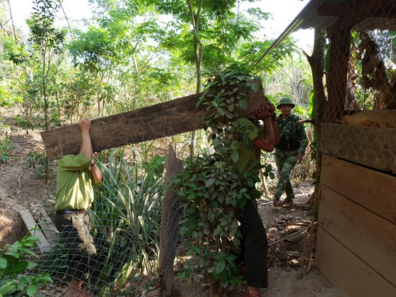 """Phát hiện 3 hầm gỗ mun """"khủng"""" ở biên giới Thượng Trạch ảnh 8"""