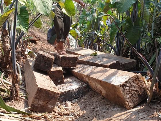 """Phát hiện 3 hầm gỗ mun """"khủng"""" ở biên giới Thượng Trạch ảnh 1"""